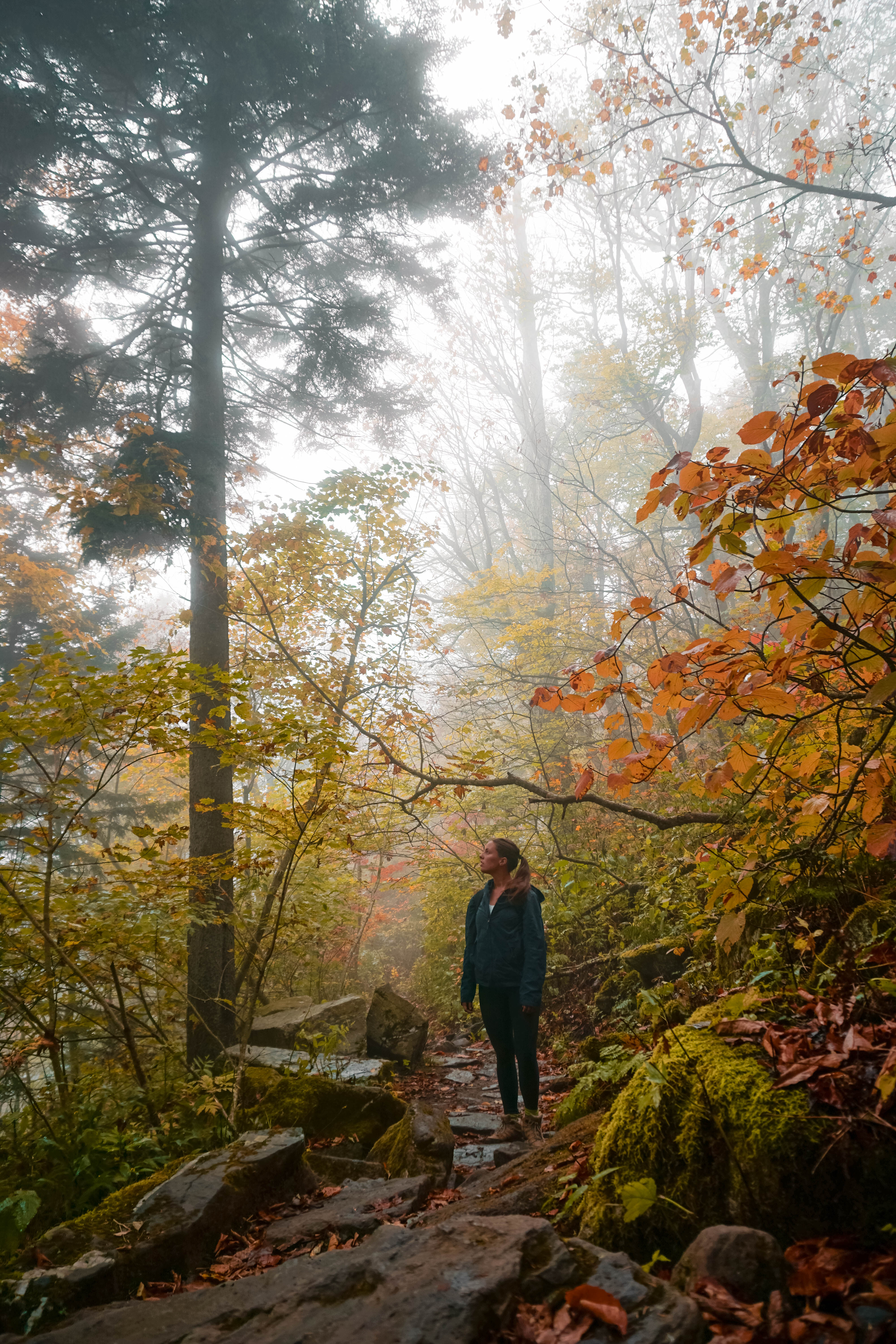 How to Visit Grandfather Mountain State Park For Free